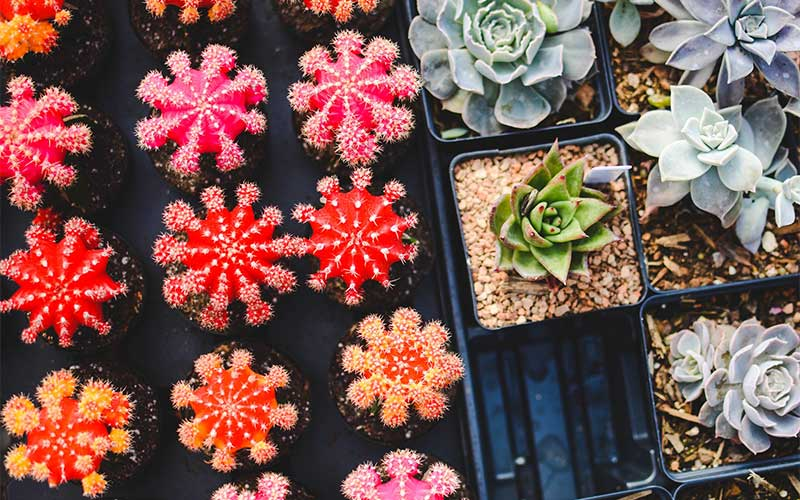 Everything You Need to Know About Desert Succulents