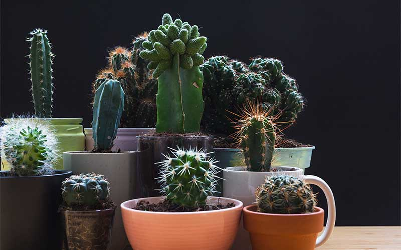 Is it easy to grow succulents?