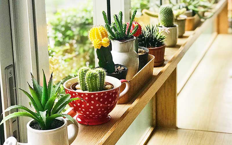 Succulent Tips for Beginners