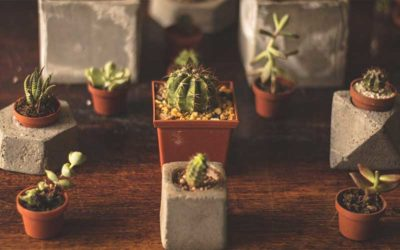 The Top Six Must-Haves for Succulent Growers