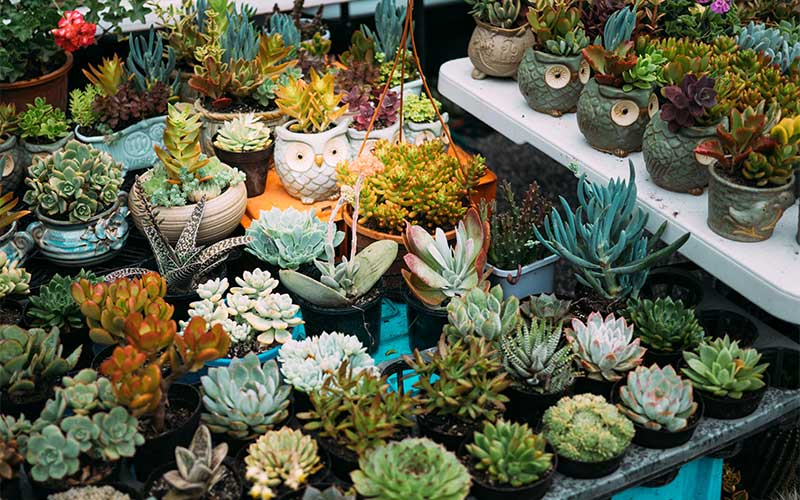 Organic fertilizers are safe for the succulent