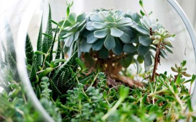 The Best Succulent Gardens in The World
