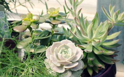 The Meaning Behind Every Succulent Arrangement