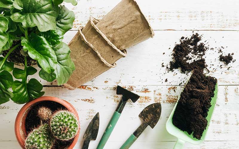 Use Cactus and Succulent Soil