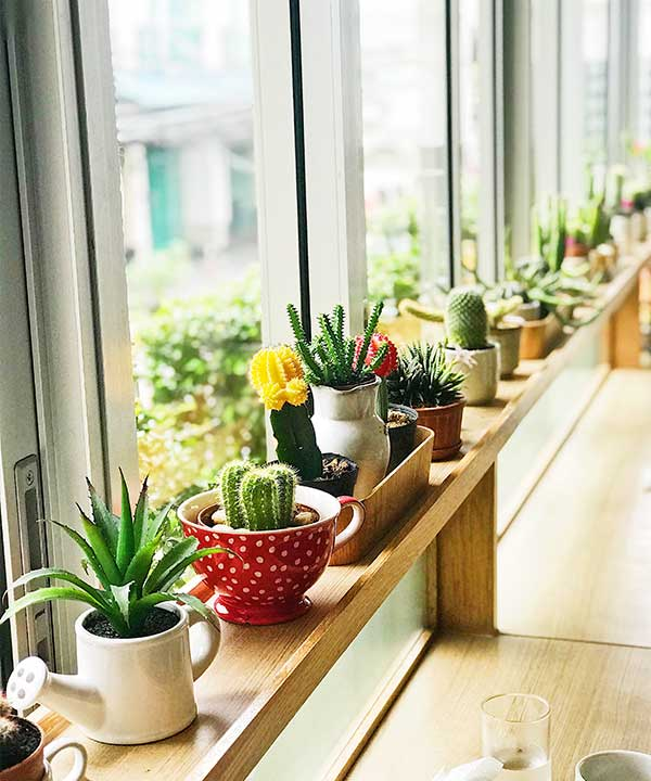 What is the perfect light setting for a new succulent to propagate or grow properly?