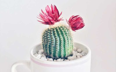 A List of Different Flowering Succulent Plants That You Can Grow At Home