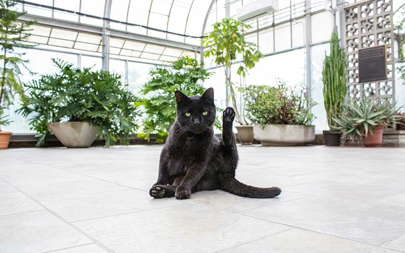 How to Keep Cats Away from Succulents