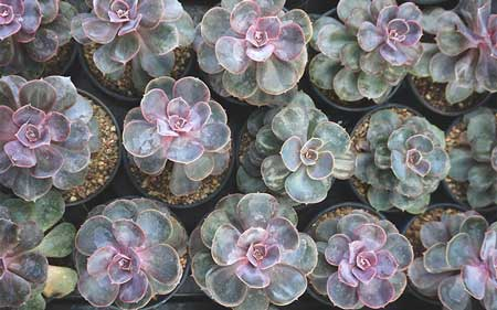 How to Propagate the Perle von Nurnberg