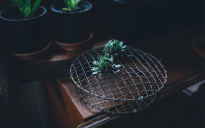 The Best Low-Light Succulents to Grow Indoors