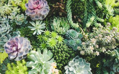 What Are The Different Types Of Succulents That You Can Grow?