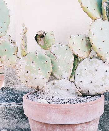 Give the cactus plant more light