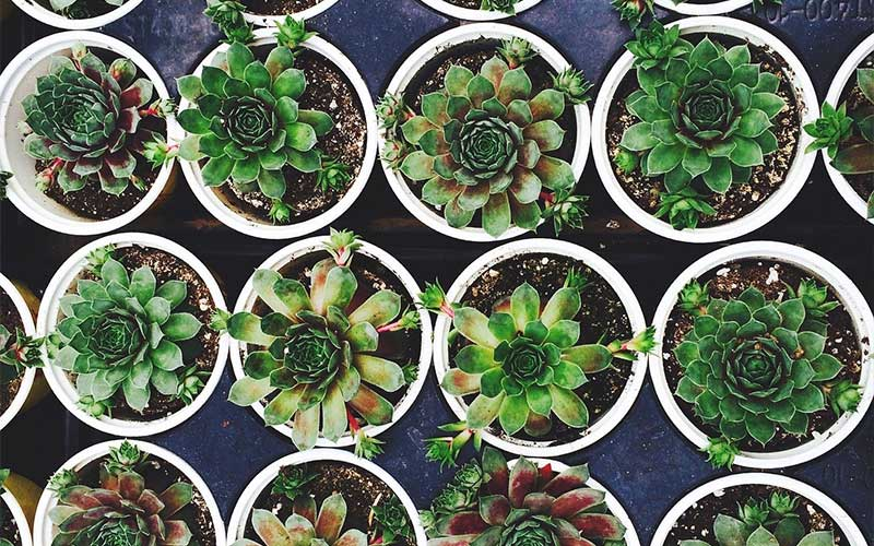 A List of the 15 Easiest Succulents to Propagate