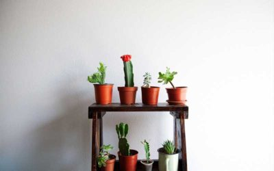 A List of Low Light Succulents to Grow