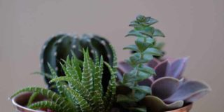 A Guide to Help You With a Succulent Transplant